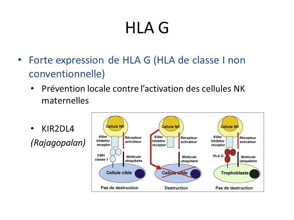 HLA G Forte expression de HLA G (HLA de classe I non conventionnelle) Prévention locale contre lactivation des cellules NK maternelles KIR2DL4 (Rajago