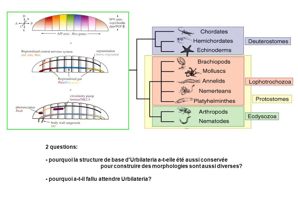 2 questions: - pourquoi la structure de base d'Urbilateria a-t-elle été aussi conservée pour construire des morphologies sont aussi diverses? - pourqu