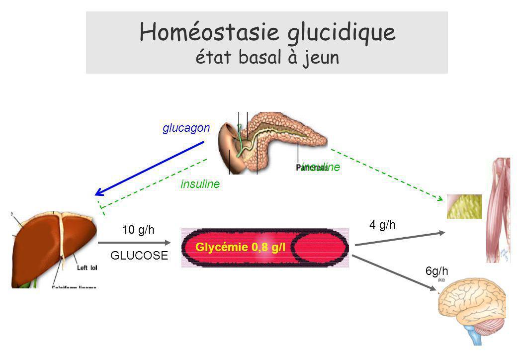 10 g/h glucagon Glycémie 0,8 g/l 4 g/h 6g/h GLUCOSE insuline Homéostasie glucidique état basal à jeun