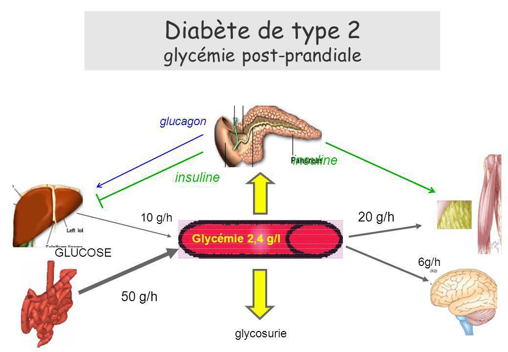 Diabète de type 2 glycémie post-prandiale 50 g/h Glycémie 2,4 g/l 6g/h GLUCOSE glucagon insuline 20 g/h insuline 10 g/h glycosurie