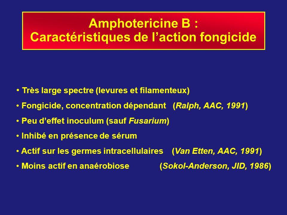 Amphotericine B : Caractéristiques de laction fongicide Très large spectre (levures et filamenteux) Fongicide, concentration dépendant (Ralph, AAC, 19