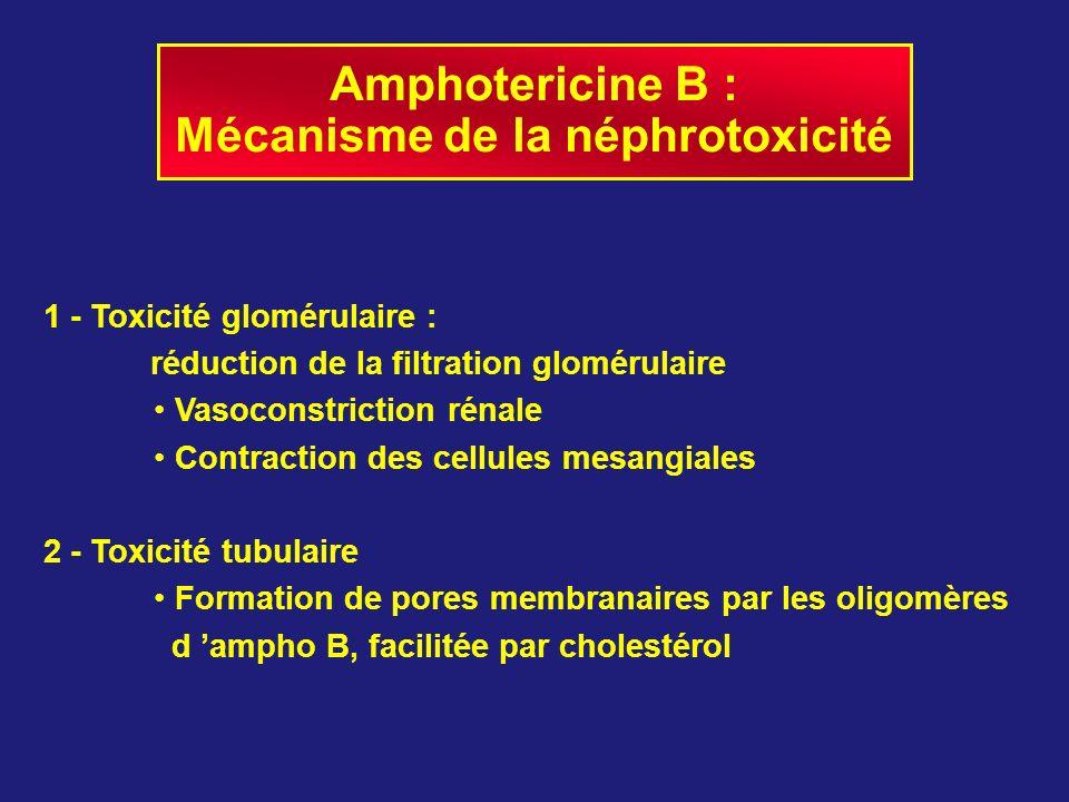 Amphotericine B : Mécanisme de la néphrotoxicité 1 - Toxicité glomérulaire : réduction de la filtration glomérulaire Vasoconstriction rénale Contracti