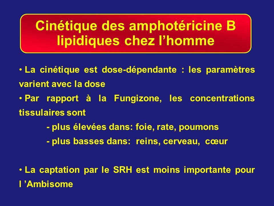 Cinétique des amphotéricine B lipidiques chez lhomme La cinétique est dose-dépendante : les paramètres varient avec la dose Par rapport à la Fungizone