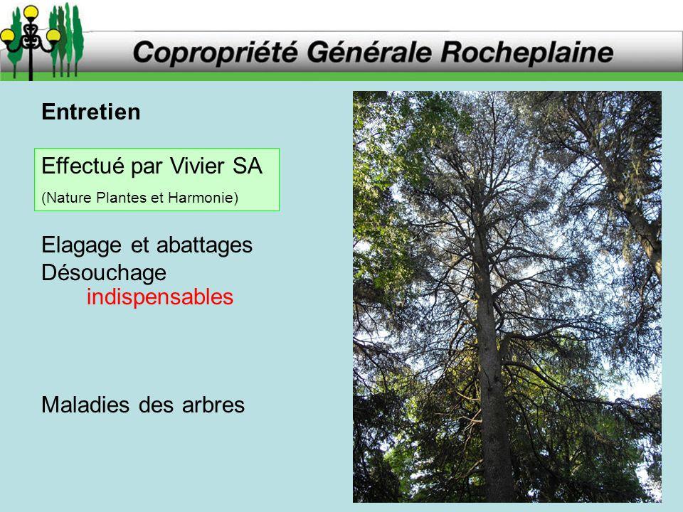 Entretien Elagage et abattages Désouchage indispensables Maladies des arbres Effectué par Vivier SA (Nature Plantes et Harmonie)