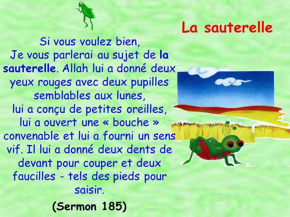 Gloire à Allah Qui a donné les pieds à la fourmi et au moucheron et créé ceux-là plus grands queux, les poissons et les éléphants.