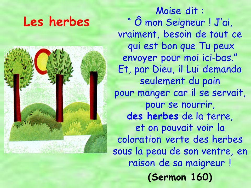 David, le Bénéficiaire des Psaumes et le Récitateur des habitants du Paradis, confectionna de ses propres mains des corbeilles en feuilles de palmier, et sadressa à ses Compagnons : « lequel parmi vous maidera à les vendre .