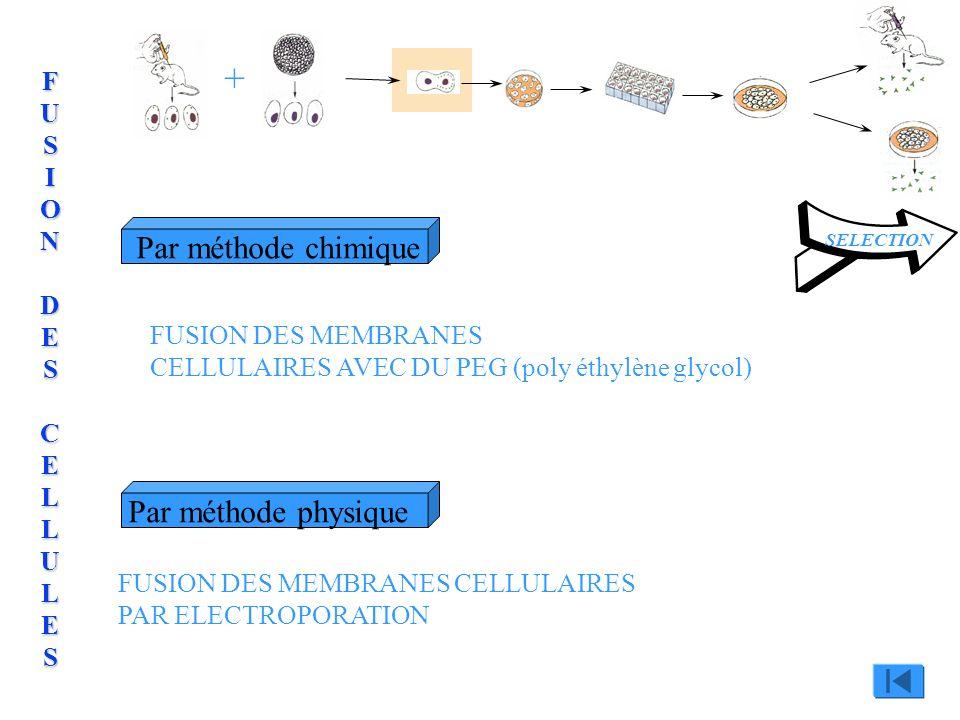 Par méthode chimiquePar méthode physique SELECTION + FUSION DES MEMBRANES CELLULAIRES AVEC DU PEG (poly éthylène glycol) FUSION DES MEMBRANES CELLULAI