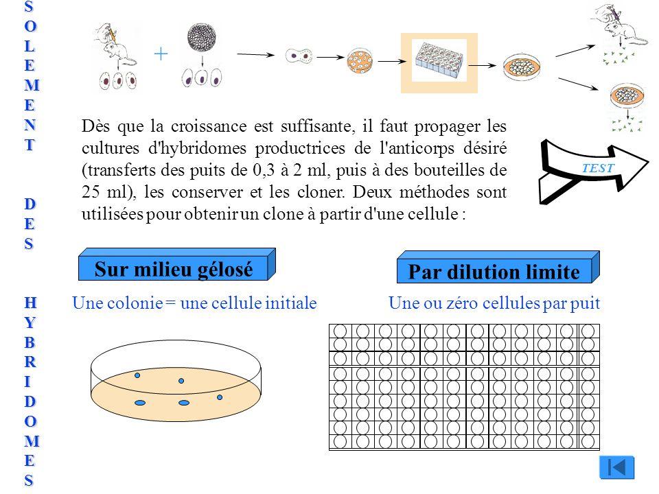 Sur milieu géloséPar dilution limite Une colonie = une cellule initialeUne ou zéro cellules par puit + TEST Dès que la croissance est suffisante, il f