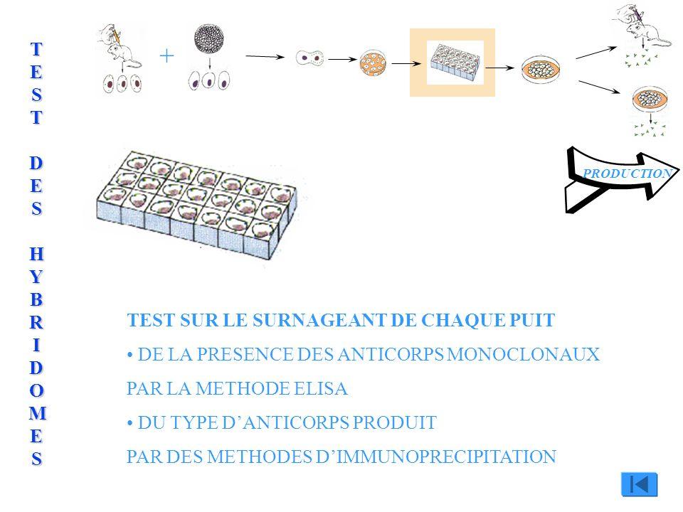 TEST SUR LE SURNAGEANT DE CHAQUE PUIT DE LA PRESENCE DES ANTICORPS MONOCLONAUX PAR LA METHODE ELISA + PRODUCTION ELISAELISAELISAELISA