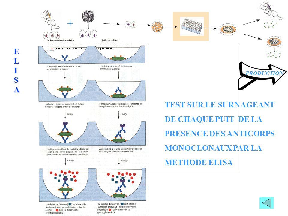 Amplification des hybridomes Production par cultures cellulaires Production dans les liquides d ascites + PRODUCTIONDESACMPRODUCTIONDESACMPRODUCTIONDESACMPRODUCTIONDESACM OBTENTION DES ANTICORPS MONOCLONAUX CONSERVATION DES HYBRIDOMES