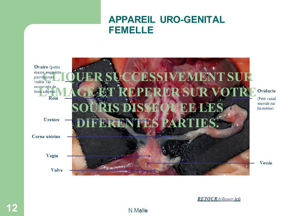 N.Malle 11 Appareil uro-génital mâle OBSERVATION DES APPAREILS URO-GENITAUX Appareil uro-génital femelle Cliquer sur la photographie correspondant à v
