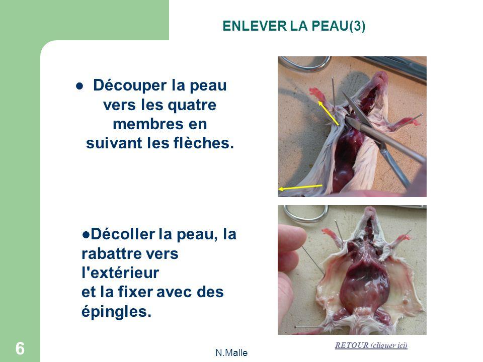 N.Malle 6 Découper la peau vers les quatre membres en suivant les flèches.