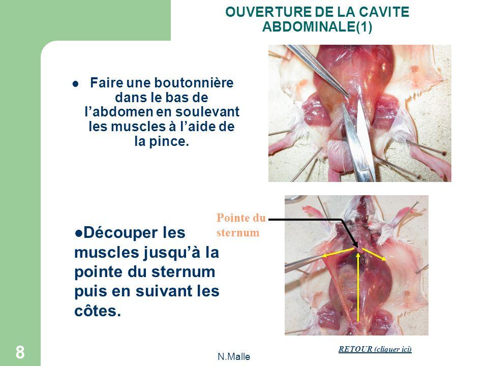 N.Malle 8 Faire une boutonnière dans le bas de labdomen en soulevant les muscles à laide de la pince.