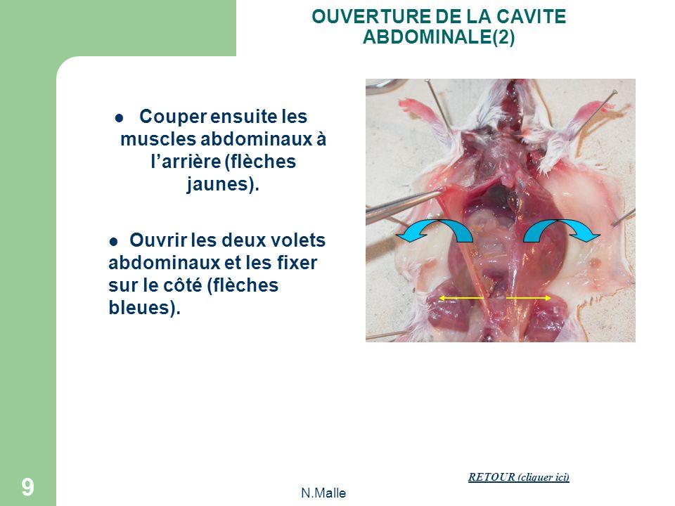 N.Malle 9 Couper ensuite les muscles abdominaux à larrière (flèches jaunes).