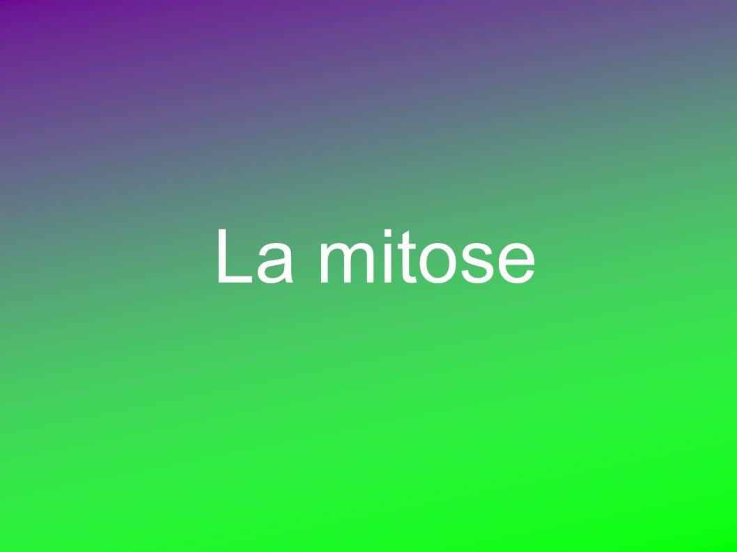 La mitose