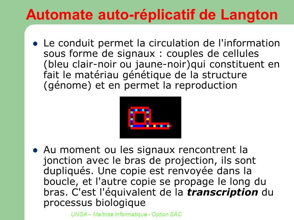 UNSA – Maîtrise Informatique - Option SAC Automate auto-réplicatif de Langton Le conduit permet la circulation de l'information sous forme de signaux