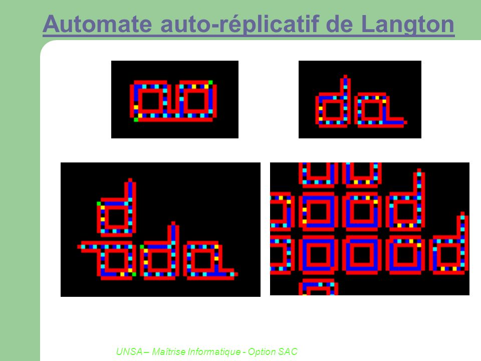 UNSA – Maîtrise Informatique - Option SAC Automate auto-réplicatif de Langton