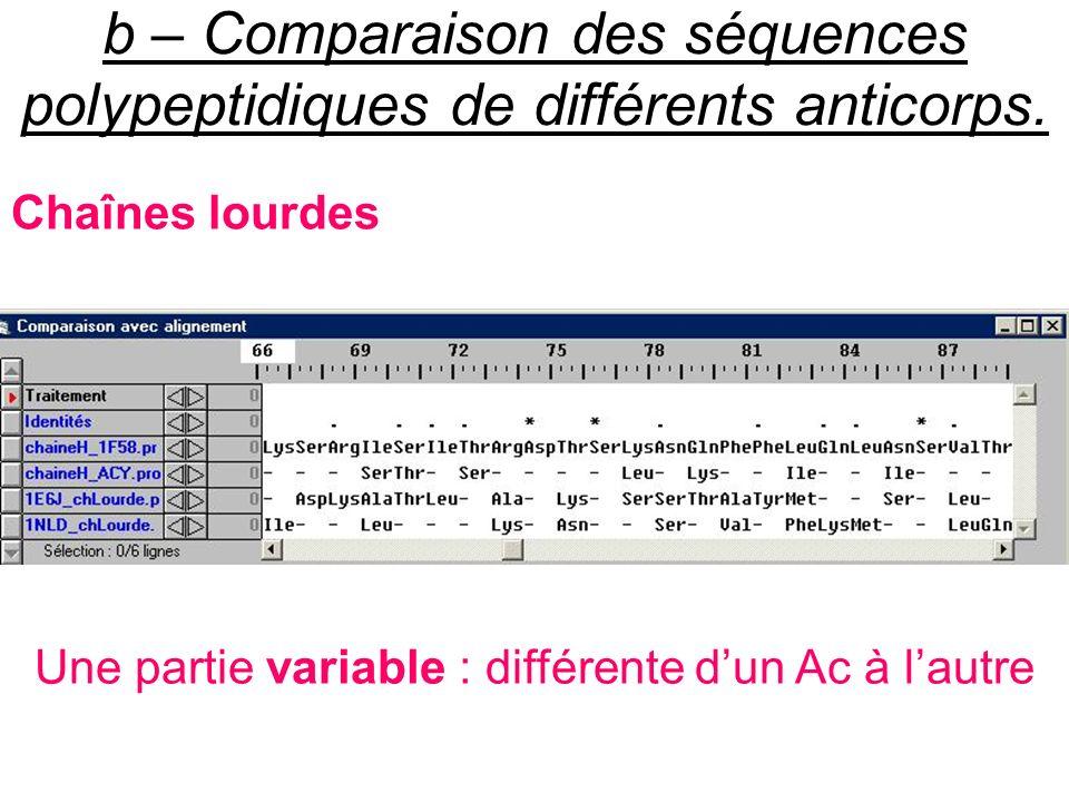 b – Comparaison des séquences polypeptidiques de différents anticorps. Chaînes lourdes Une partie variable : différente dun Ac à lautre