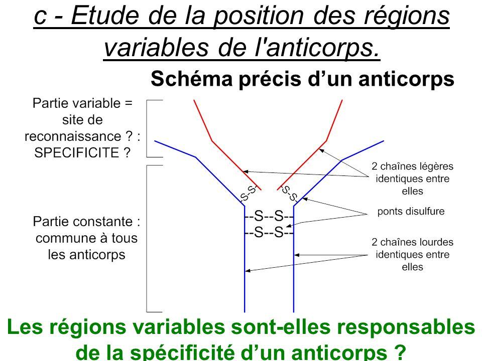 c - Etude de la position des régions variables de l'anticorps. Schéma précis dun anticorps Les régions variables sont-elles responsables de la spécifi
