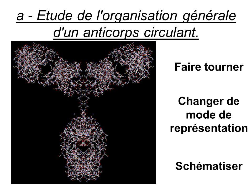 c - Etude de la position des régions variables au niveau de la structure tridimensionnelle de l anticorps.