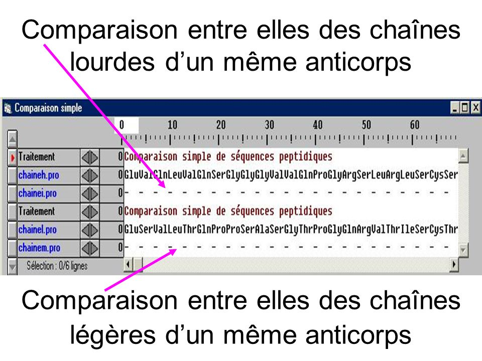 Comparaison entre elles des chaînes lourdes dun même anticorps Comparaison entre elles des chaînes légères dun même anticorps
