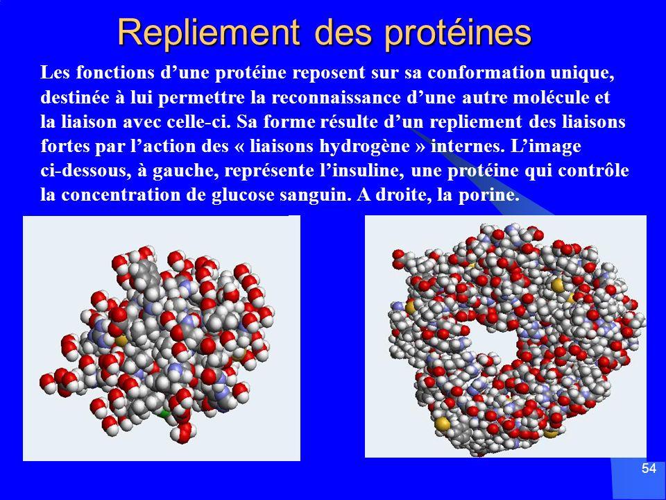 54 Repliement des protéines Les fonctions dune protéine reposent sur sa conformation unique, destinée à lui permettre la reconnaissance dune autre mol