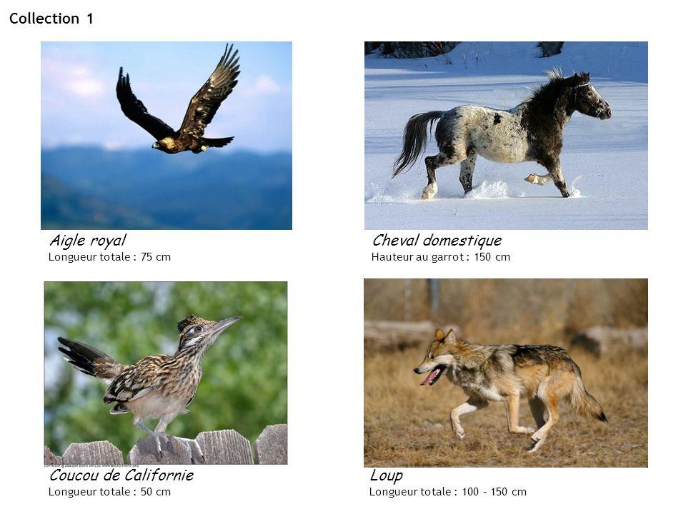 Collection 1 Cheval domestique Hauteur au garrot : 150 cm Aigle royal Longueur totale : 75 cm Coucou de Californie Longueur totale : 50 cm Loup Longue