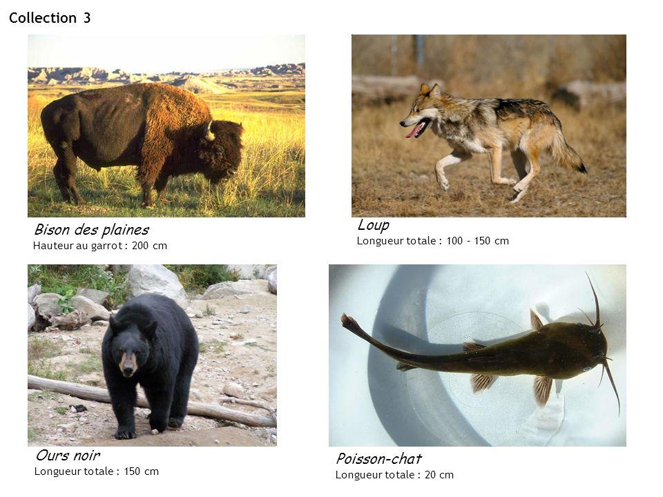 Collection 3 Bison des plaines Hauteur au garrot : 200 cm Ours noir Longueur totale : 150 cm Poisson-chat Longueur totale : 20 cm Loup Longueur totale