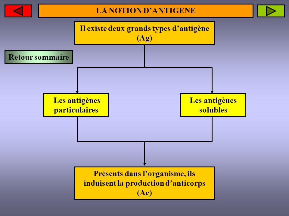 LA NOTION DANTIGENE Présents dans lorganisme, ils induisent la production danticorps (Ac) Les antigènes solubles Les antigènes particulaires Il existe
