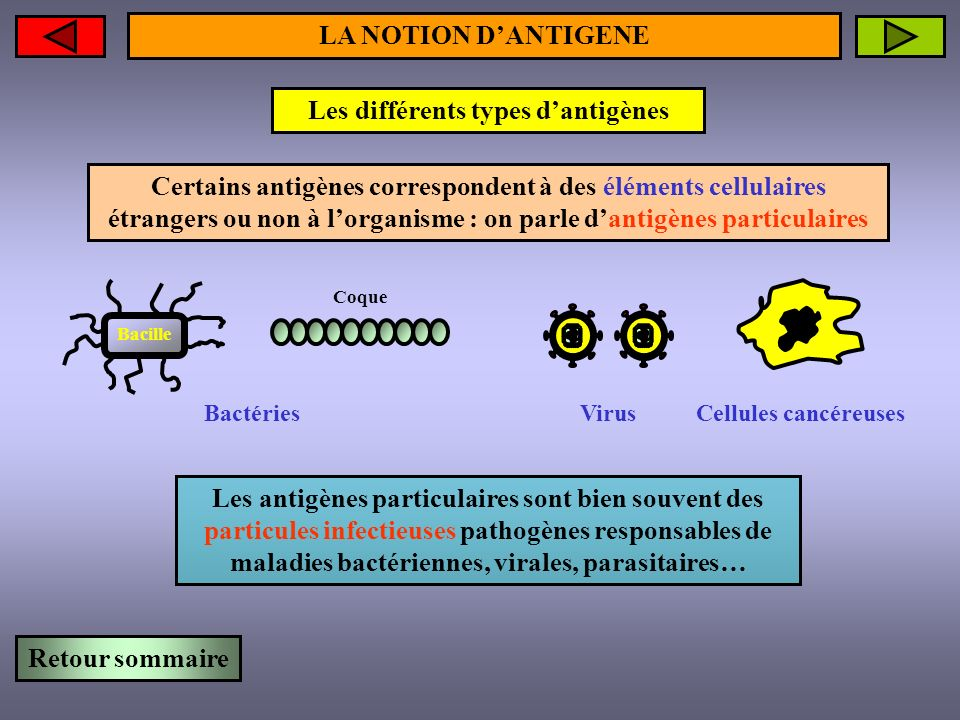 Les différents types dantigènes LA NOTION DANTIGENE Toxine microbienne Effets pathogènes Bacille Un antigène soluble peut être une simple molécule toxique, appelée TOXINE, fabriquée par une bactérie pathogène Quelques toxines connues : toxine tétanique, toxine botulique, toxine cholérique, toxine diphtérique… Certains antigènes correspondent à des éléments moléculaires étrangers à lorganisme : on parle dantigènes solubles Retour sommaire