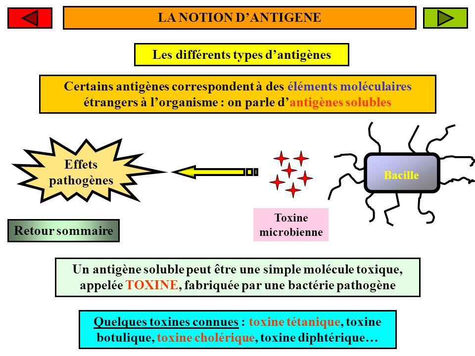 LA NOTION DANTIGENE La capacité dun Ag à induire la fabrication dAc par les plasmocytes est due à lexistence de petites zones précises, localisées sur lantigène, appelées DETERMINANTS ANTIGENIQUES ou EPITOPES Déterminant antigénique 2 Déterminant antigénique 1 Déterminant antigénique 2 Un antigène, quil soit particulaire ou soluble, peut comporter un ou plusieurs déterminants antigéniques ou épitopes Retour sommaire Ag particulaire