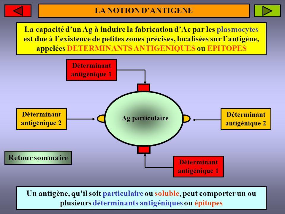 Anticorps 2 Anticorps 1 LA NOTION DANTIGENE Un antigène, quil soit particulaire ou soluble, induira la formation dautant danticorps différents quil possède dépitopes différents Le complexe « antigène – anticorps » constitue le complexe immun Retour sommaire