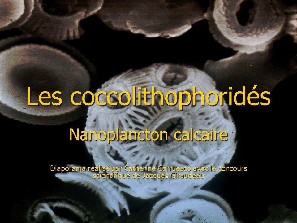 Les coccolithophoridés Nanoplancton calcaire Diaporama réalisé par Catherine Carruesco avec le concours scientifique de Jacques Giraudeau