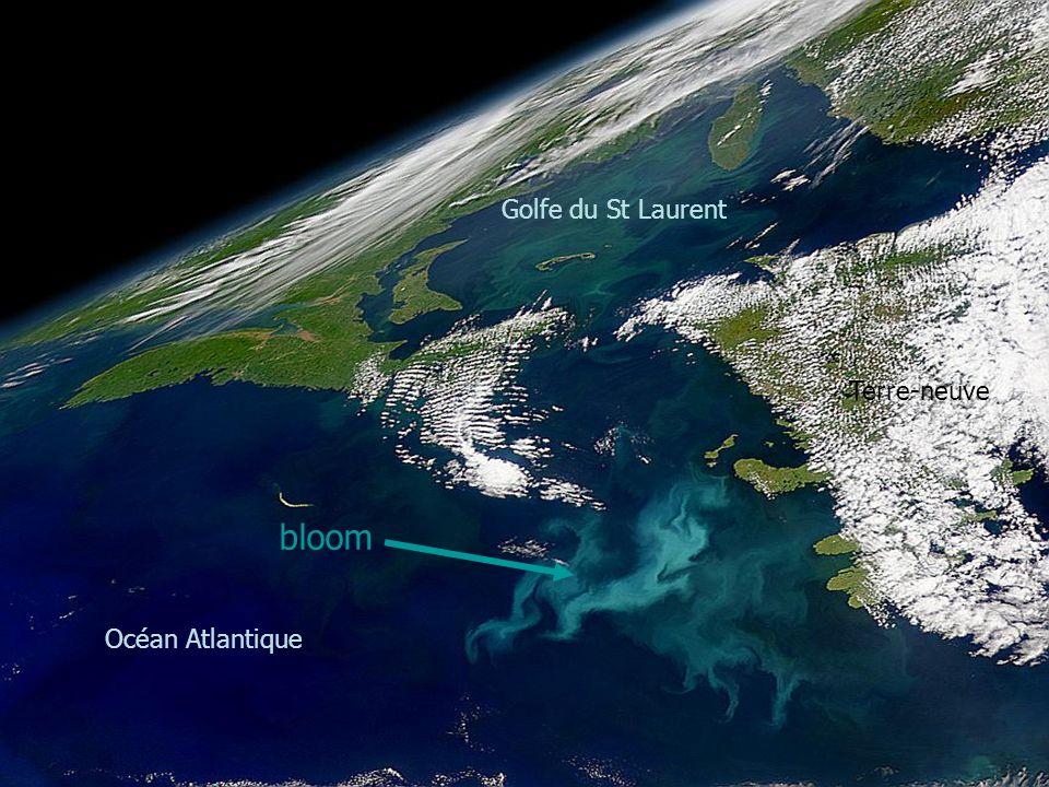 bloom Terre-neuve Océan Atlantique Golfe du St Laurent