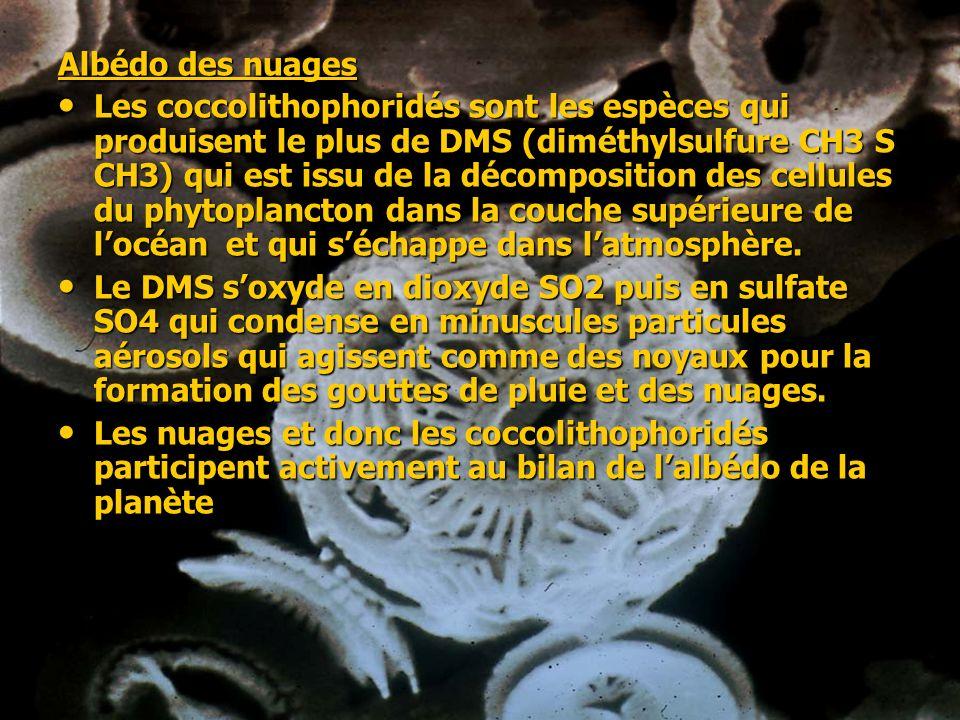 Albédo des nuages Les coccolithophoridés sont les espèces qui produisent le plus de DMS (diméthylsulfure CH3 S CH3) qui est issu de la décomposition d