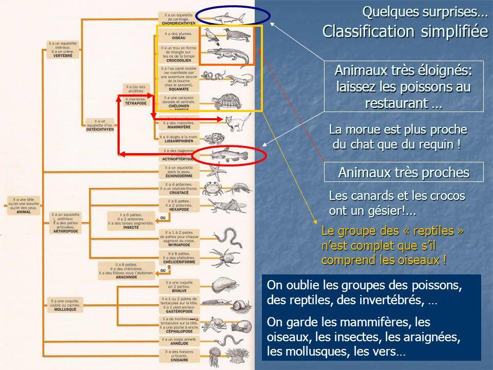 Quelques surprises… Classification simplifiée Animaux très éloignés: laissez les poissons au restaurant … La morue est plus proche du chat que du requ