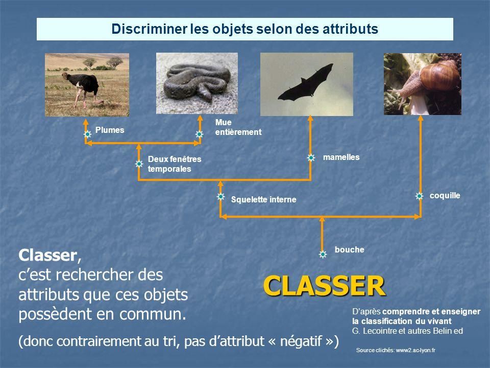 CLASSER Deux fenêtres temporales Squelette interne Daprès comprendre et enseigner la classification du vivant G. Lecointre et autres Belin ed Source c