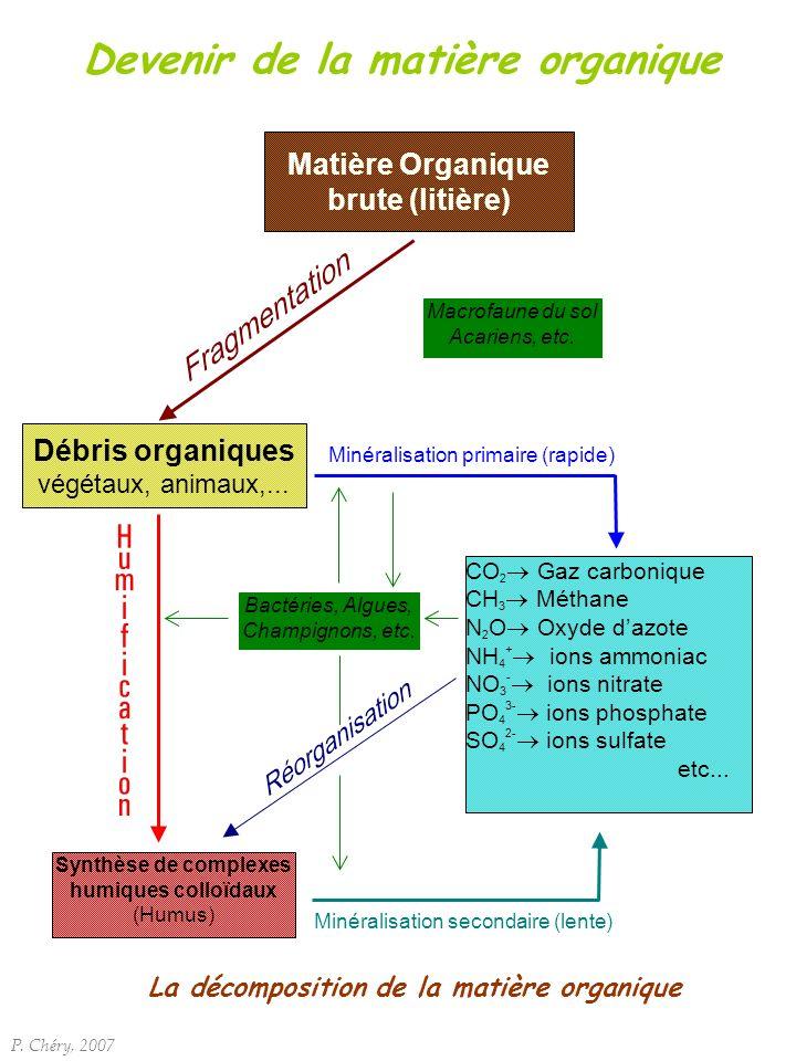 Devenir de la matière organique Débris organiques végétaux, animaux,... CO 2 Gaz carbonique CH 3 Méthane N 2 O Oxyde dazote NH 4 + ions ammoniac NO 3