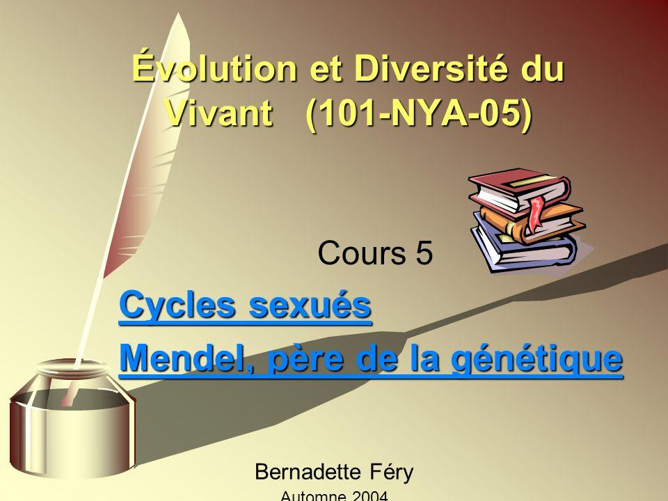 Évolution et Diversité du Vivant (101-NYA-05) Cours 5 Cycles sexués Mendel, père de la génétique Bernadette Féry Automne 2004