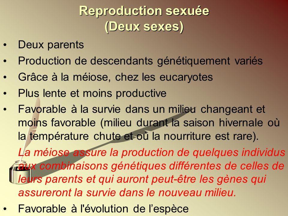 Reproduction sexuée (Deux sexes) Deux parents Production de descendants génétiquement variés Grâce à la méiose, chez les eucaryotes Plus lente et moin