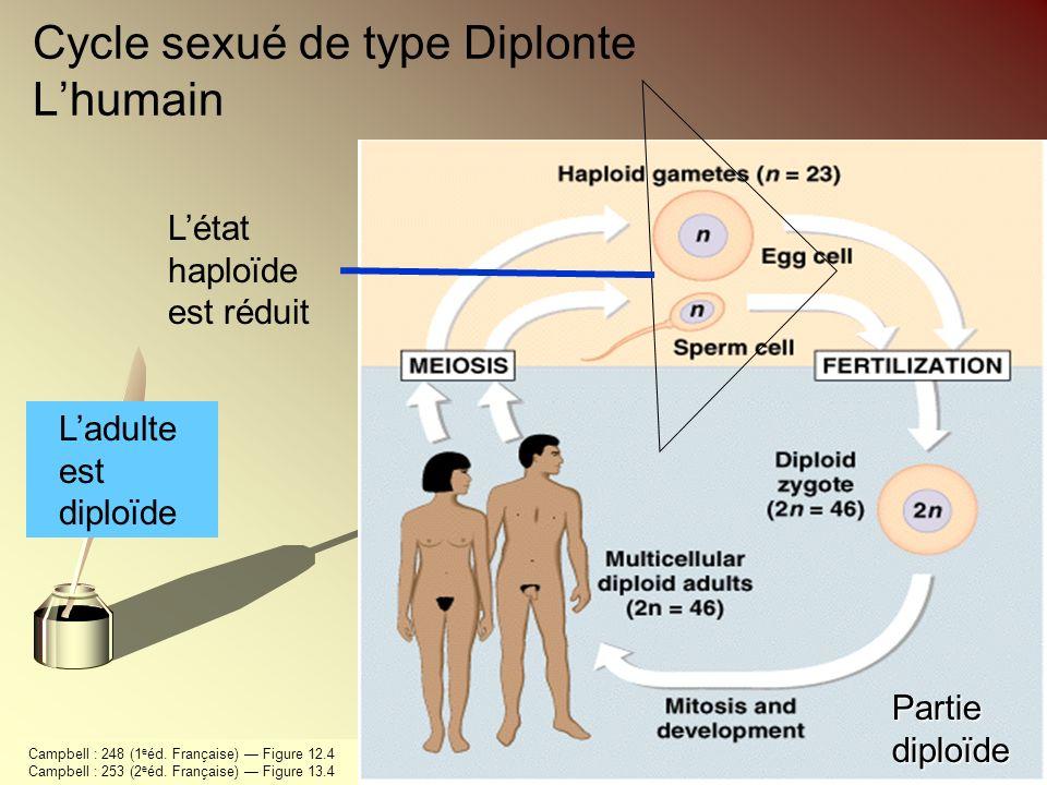 Cycle sexué de type Diplonte Lhumain Ladulte est diploïde Létat haploïde est réduit Partie diploïde Campbell : 248 (1 e éd. Française) Figure 12.4 Cam