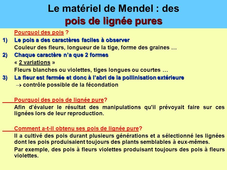pois de lignée pures Le matériel de Mendel : des pois de lignée pures Pourquoi des pois ? 1)Le pois a des caractères faciles à observer Couleur des fl