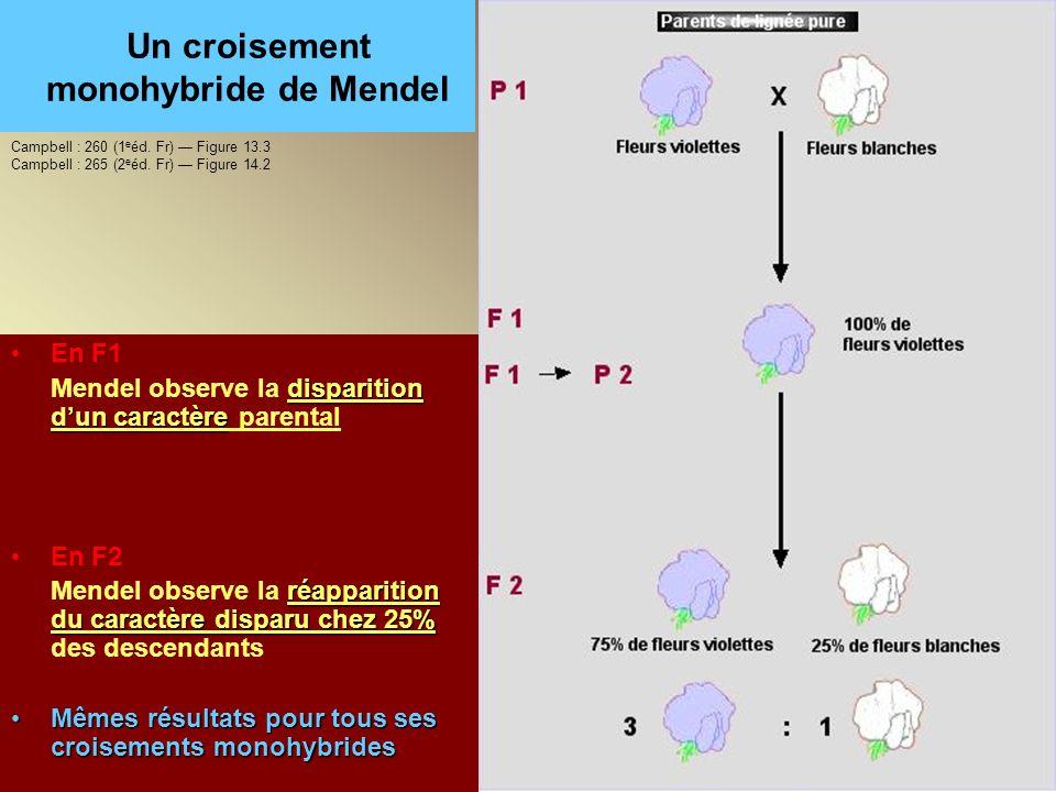 Un croisement monohybride de Mendel En F1 disparition dun caractère Mendel observe la disparition dun caractère parental En F2 réapparition du caractè