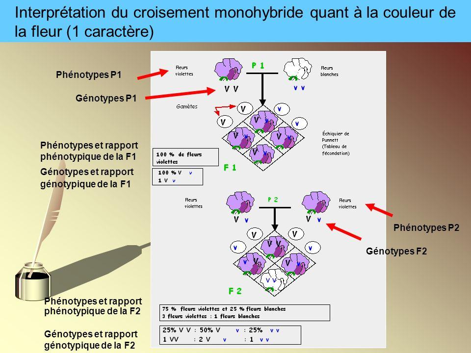 Interprétation du croisement monohybride quant à la couleur de la fleur (1 caractère) Génotypes et rapport génotypique de la F1 Phénotypes et rapport