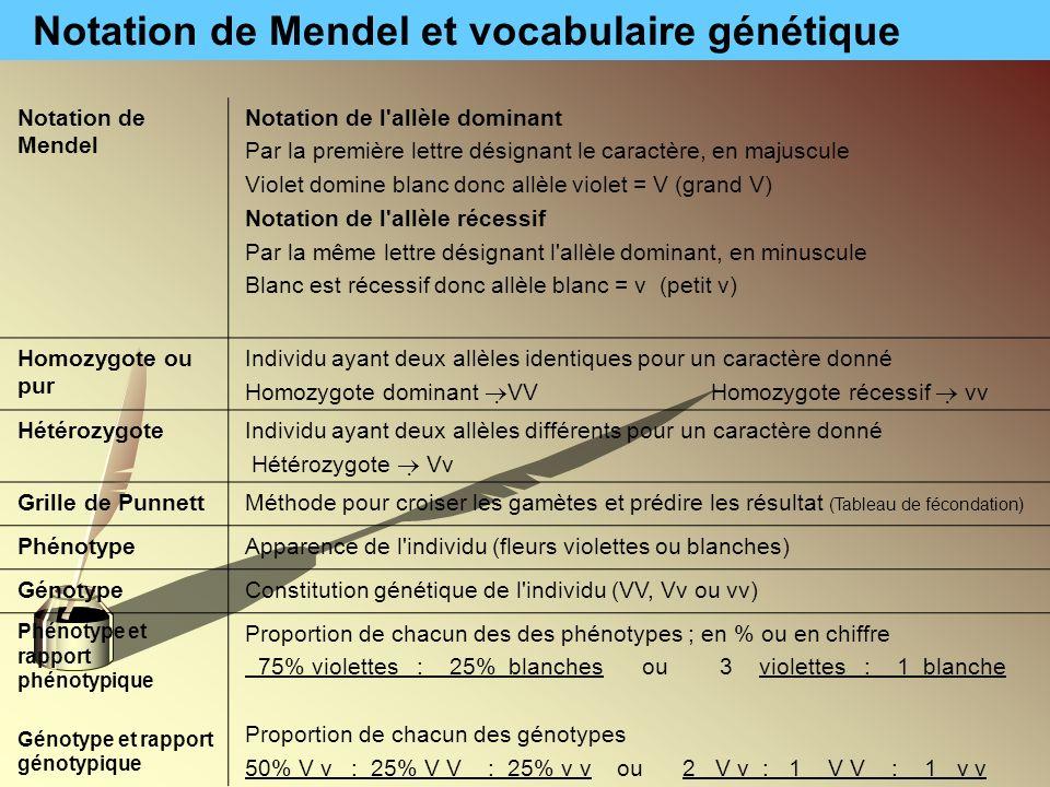 Notation de Mendel et vocabulaire génétique Notation de Mendel Notation de l'allèle dominant Par la première lettre désignant le caractère, en majuscu