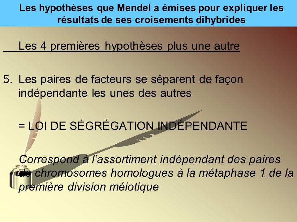 Les hypothèses que Mendel a émises pour expliquer les résultats de ses croisements dihybrides Les 4 premières hypothèses plus une autre 5.Les paires d