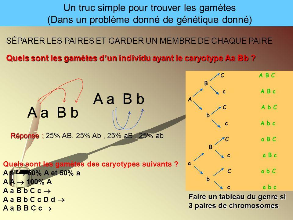 Un truc simple pour trouver les gamètes (Dans un problème donné de génétique donné) SÉPARER LES PAIRES ET GARDER UN MEMBRE DE CHAQUE PAIRE Quels sont