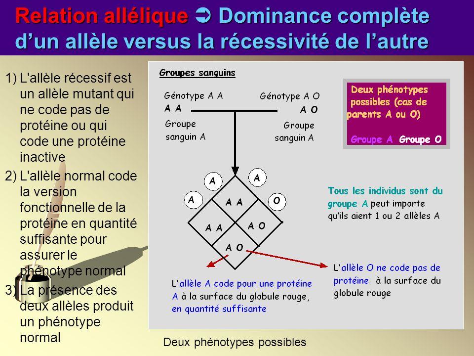 Relation allélique Dominance complète dun allèle versus la récessivité de lautre 1)L'allèle récessif est un allèle mutant qui ne code pas de protéine