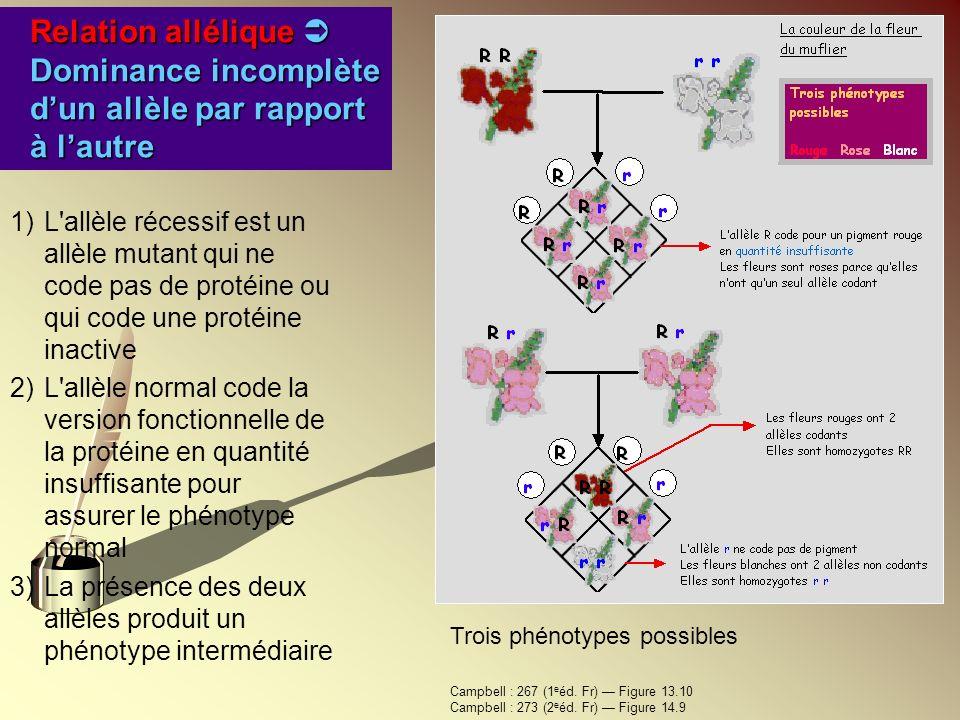 1)L'allèle récessif est un allèle mutant qui ne code pas de protéine ou qui code une protéine inactive 2)L'allèle normal code la version fonctionnelle