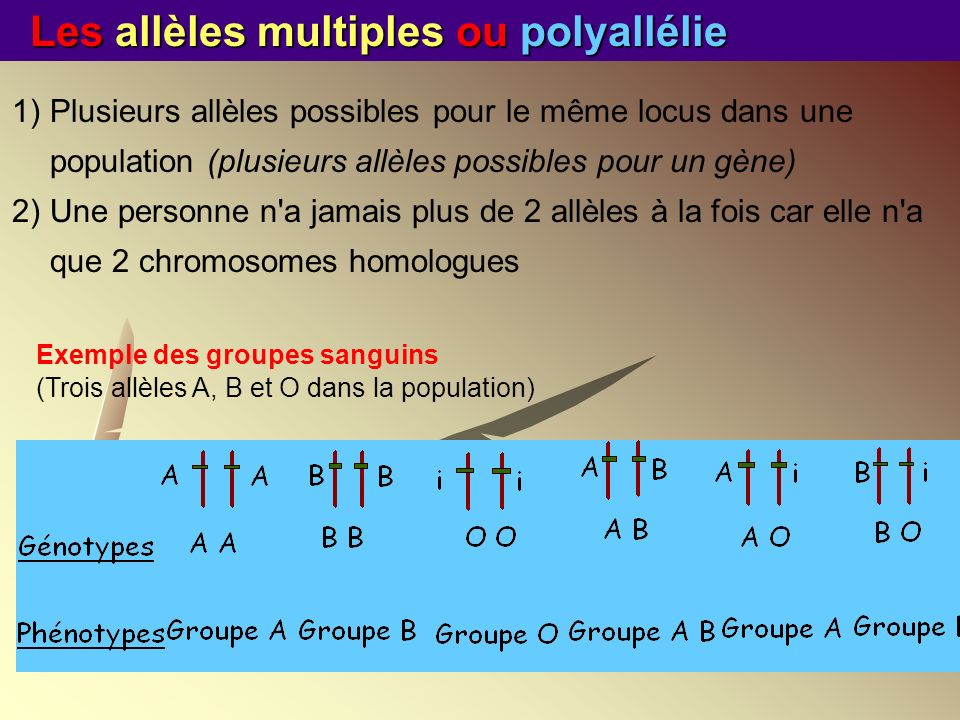 Les allèles multiples ou polyallélie Exemple des groupes sanguins (Trois allèles A, B et O dans la population) 1)Plusieurs allèles possibles pour le m